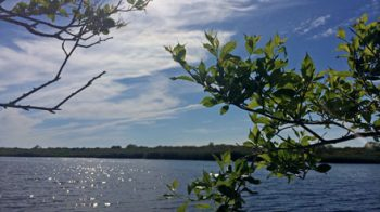 Miacomet Pond
