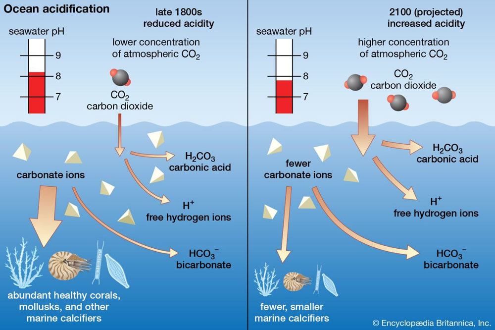 Graphic depicting Ocean Acidification.