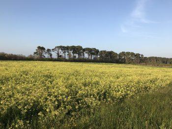 Bartlett's Farm Field CR